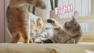 두-고양이에게-싸움을-붙여봤어요
