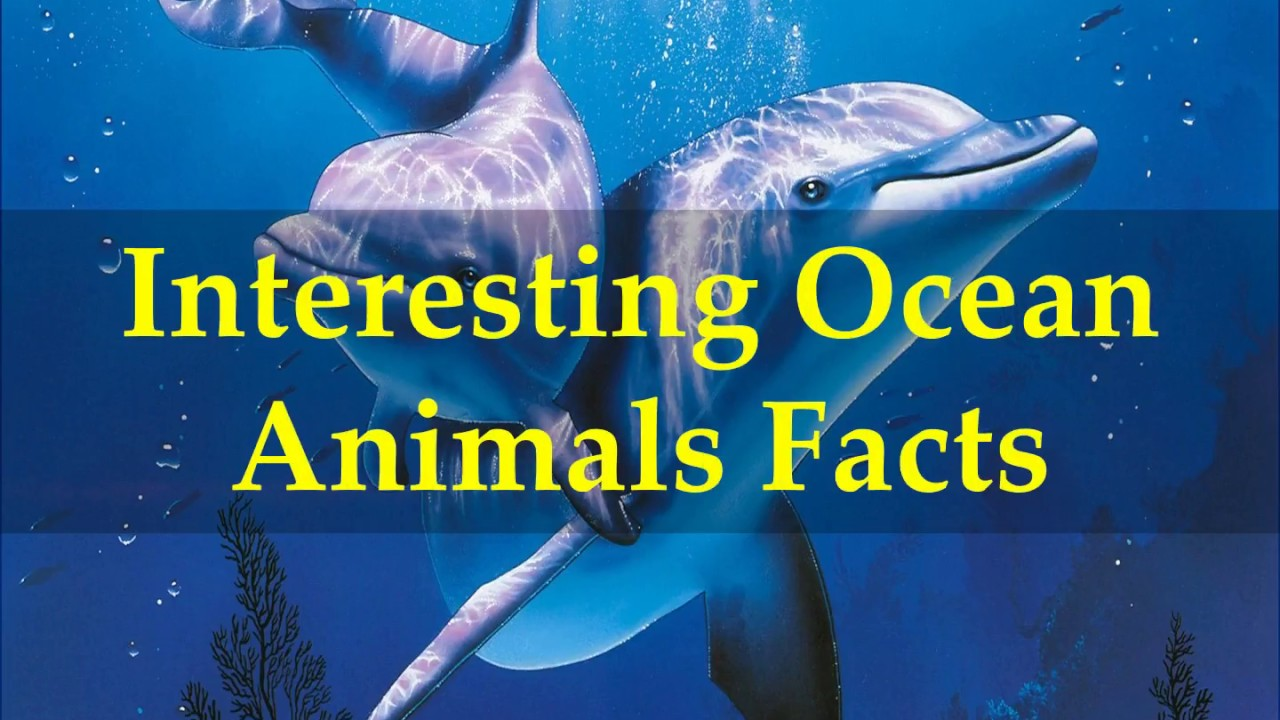 Image of: Amazing Things Youtube Interesting Ocean Animals Facts Youtube
