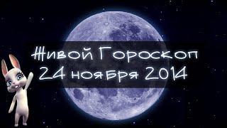 Смешная Зайка Zoobe - гороскоп для ОВНОВ ♈. + Свежий прикол!