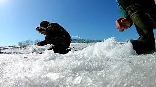 ловля окуня последний лёд закрытие сезона твердой воды