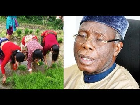Audu Ogbeh's reported claim is untrue about rice production - Thailand Ambassador