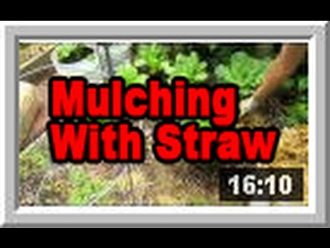 Mulching With Straw Wisconsin Garden Video Blog 524 Youtube
