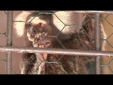 Marseille : deux singes volés au zoo de La Barben