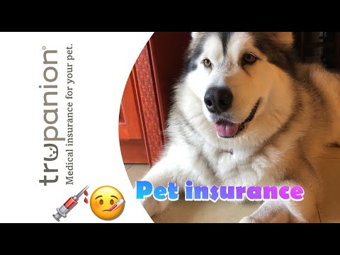Pet Insurance Should You Get It?   TruPanion Dog Health Insurance