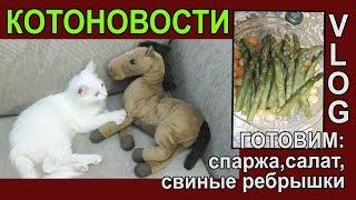 КОТОНОВОСТИ Animal in Crisis Домашний VLOG ГОТОВИМ праздничный Ужин JANNA FET