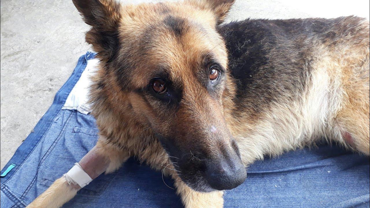 Botulismo Tem Cura Sim Meu Cachorro Pegou Tratamento