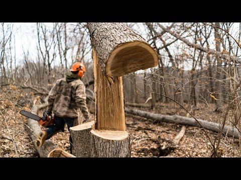 Top 10 Hinge Cut Deer Bedding Area Fails