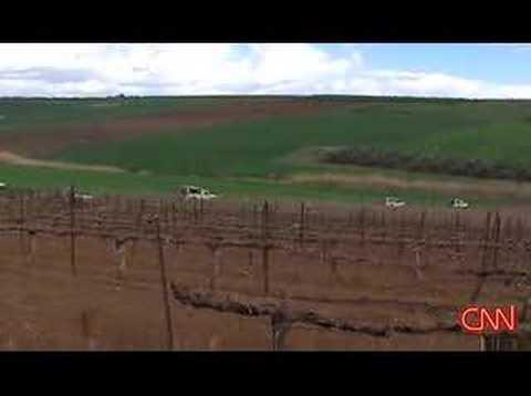 Wine Industry in Israel
