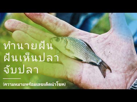 ทำนายฝัน ฝันว่าจับปลา ฝันว่าจับปลาช่อน ฝันว่าจับปลาได้จำนวนมาก ฝันเห็น ฝันว่า เลขเด็ด