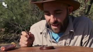 Il se laisse piquer par une fourmi de velours-( BELOW THE VIDEO-BEST-TEEN-+18 )