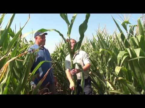 Corn School: 250 Bushels Or 70 Bushels — Measuring Drought Impact