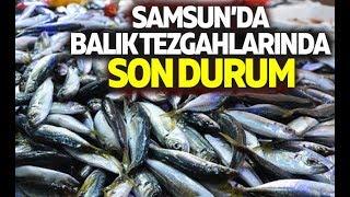 Samsun'da Balık Tezgahlarında Son Durum