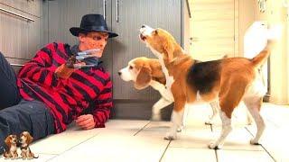 Dogs Vs Freddy Krueger Prank FAIL : Funny Dogs Louie & Marie