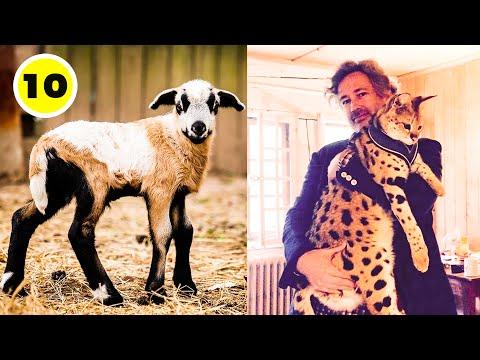 Download - hybrid animals video, fj ytb lv