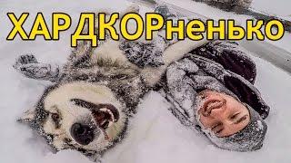 КРАШ ТЕСТ МАЛАМУТ И ХАСКИ / CRASH TEST Malamute and Husky