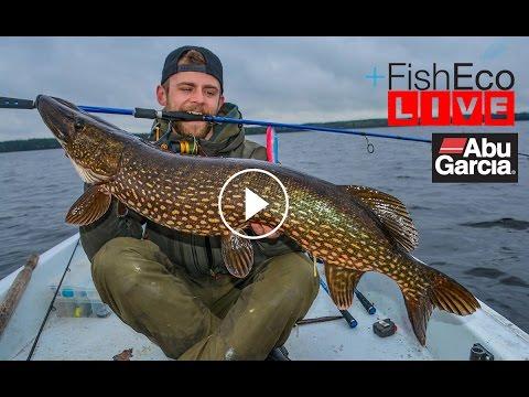 LIVEfiske efter gädda med Anton Tsvetkov Team Abu Garcia!