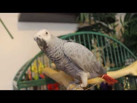 5 THINGS TO PREPARE BEFORE YOU GET A PARROT