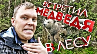 Как Финны Тренируют охотничьих собак. Встретил медведя в лесу.