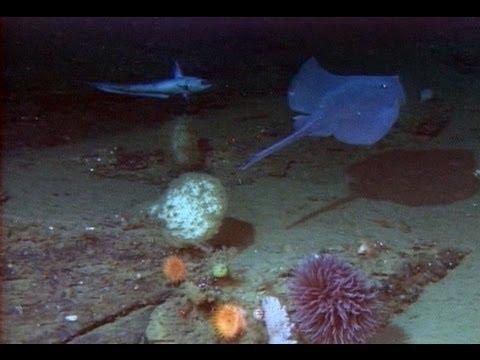 Ocean Explorations: Astoria Canyon And Heceta Bank