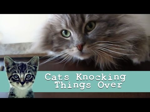 'Cats Knocking Things Over' : Funny Cat Video