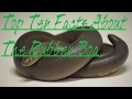 Top Ten Facts About The Rubber Boa