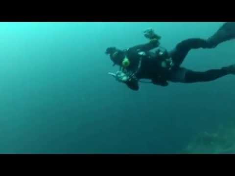Malapascua (Monad Shoal) - Full Dive