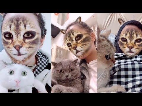 Вопрос: Как ваши кошки реагируют на кошачье видео?