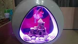 Китайский нано аквариум, мини обзор.