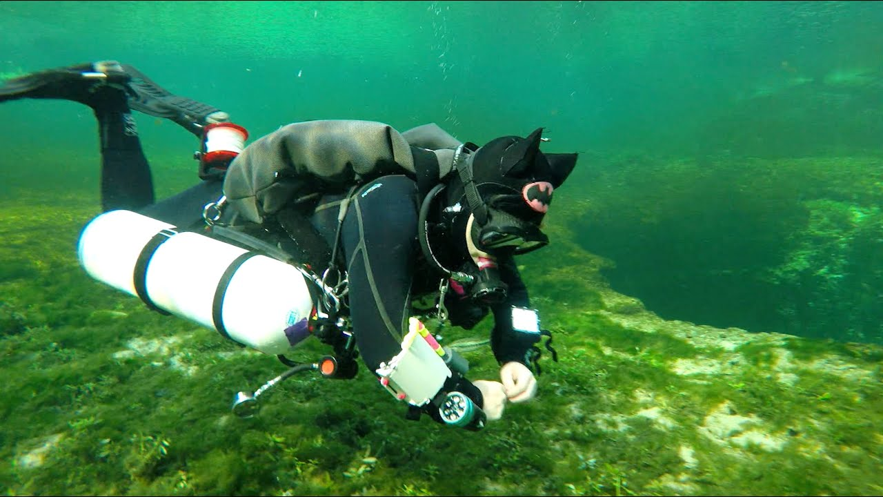 Ginnie springs cave dive with dive rite youtube - Dive rite sidemount ...