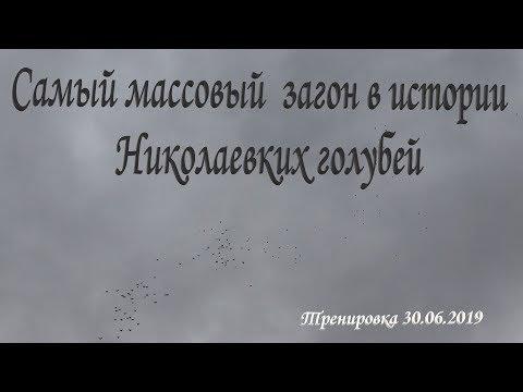 Самый массовый загон в истории Николаевских голубей