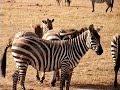 Kenia - Amboseli Pirschfahrt