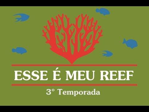 ESSE É MEU REEF - Mauricio Araujo