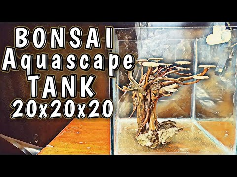 membuat-bonsai-mini-untuk-aquascape