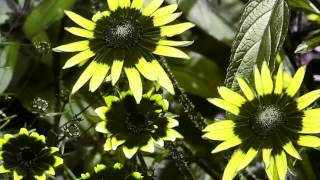 Удивительные и прекрасные растения