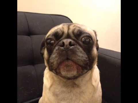 Dog says 'I Love You'