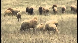 Видео курс ПДД-40: Дополнительные требования к движению гужевых повозок , а также к прогону животных