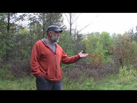 What Is Crown Land Trespass?