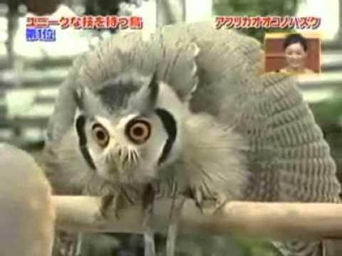evil owl youtube