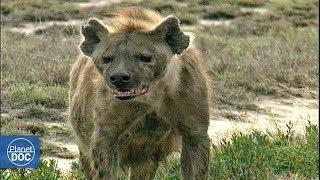 Serengeti National Park - Full Documentary