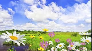Футаж Летний фон заставка - поле с цветами