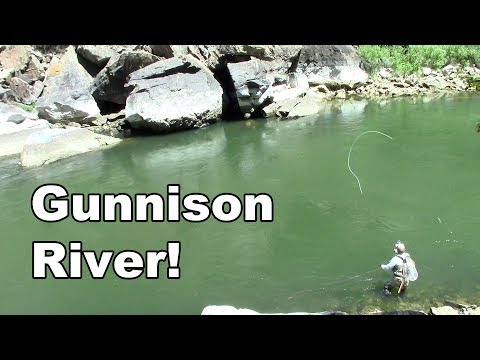 Gunnison River Colorado - Fly Fishing Tailwater of the Blue Mesa Reservoir - McFly Angler Episode 26