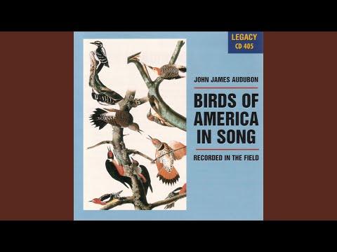 North American Warblers