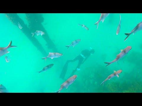 Freediving Port Noarlunga Part 8 | Port Adelaide Freediving Club (South Australia)