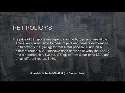 Qatar Airways Pet Policy