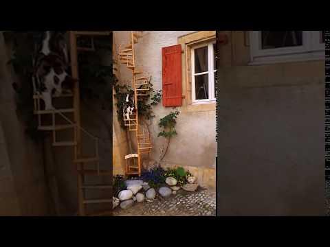 Romainmôtier -  Escalier En Colimaçon Pour Eliott Le Chat