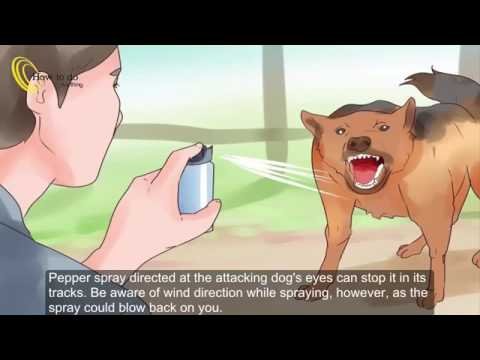 How To Protect Yourself From Dogs While Walking