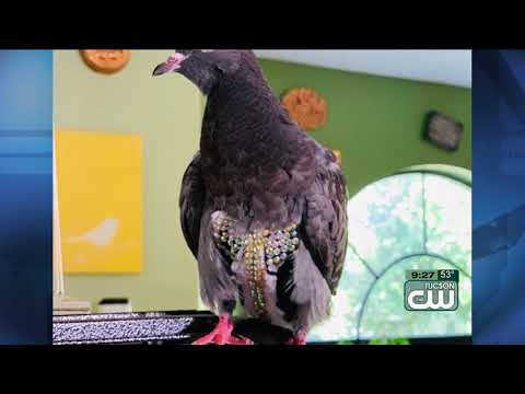 The Woody Show - Is This Your Pigeon Wearing a Vest?