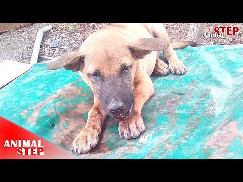 Rescue of Homeless Dog with Injured Jaw | ANIMALSTEP