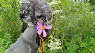 Сова Ива в летнем саду жмякает цветочки