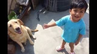 Labrador Retriever - Best child safe dog in world